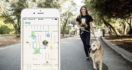 Dog Walker Service App